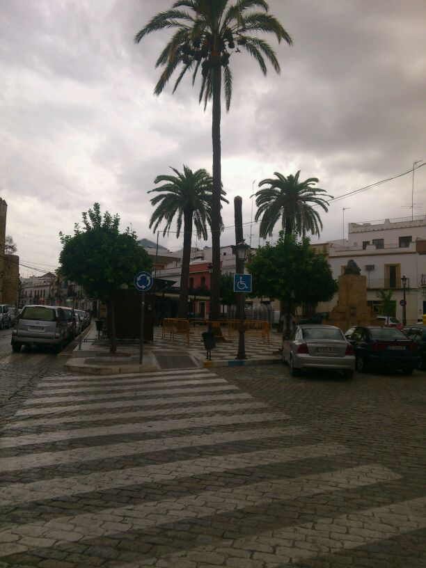 Incidencias en algunas palmeras de la Plaza Alvarado Palmera1